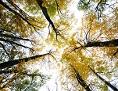 Bäume, von unten gesehen