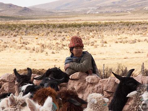 Die Menschen im bolivianischen Hochland leben von Ackerbau und Viehzucht