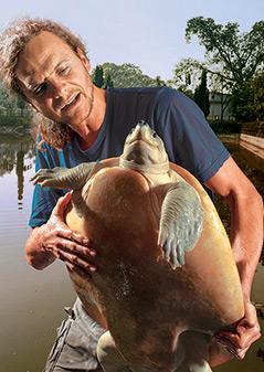 Peter Praschak mit einer Schildkröte (Batagur Baska)
