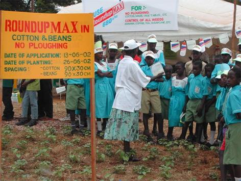 Schüler in Uganda lernen über Pflanzenschutz