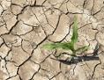 Ein kleines Maispflänzchen auf einem trockenen, rissigen Boden.