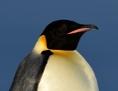 Zwei Kaiserpinguine in der Antarktis
