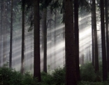 Wunderwelt Wald  (1) - Das Schattenreich
