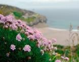 Cornwall - Englands Sonnenküste