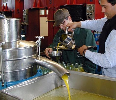Ölivenöl wird gepresst