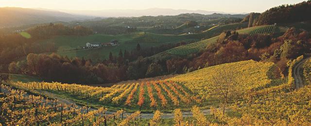 Weingärten der Südsteiermark