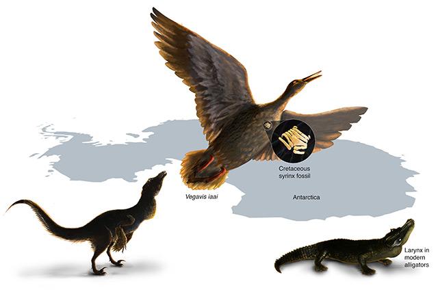 So könnte der Vogel Vegavis iaai ausgesehen haben