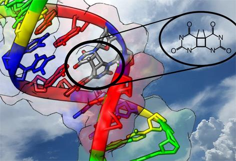 Durch Einfluss von UV-Strahlung finden Nukleobasen, die Bausteine der DNA, manchmal den falschen Partner.
