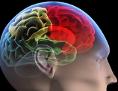 Eine schematische Darstellung des menschlichen Gehirns in verschiedenen Farben