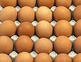 Eier lagern in Eierkartons