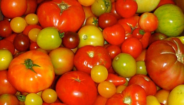 mehr geschmack f r fade tomaten science. Black Bedroom Furniture Sets. Home Design Ideas