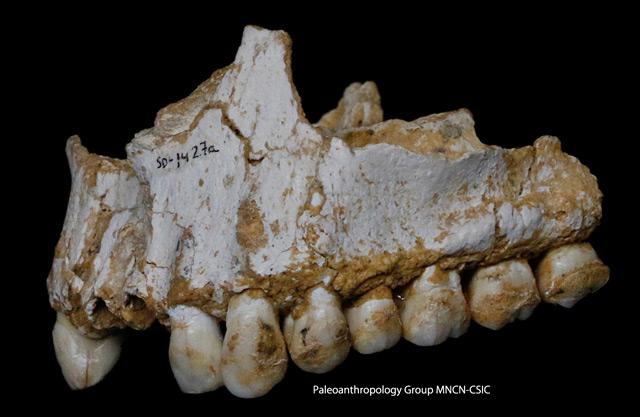 Kiefer eines Neandertalers