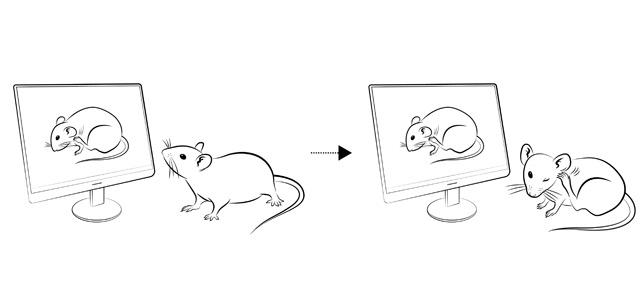 Zeichnung von sich kratzenden Mäusen