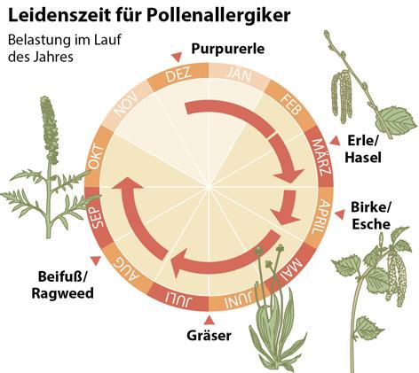 Grafik zur Pollenbelastung
