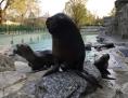 Robben im Tiergarten Schönbrunn