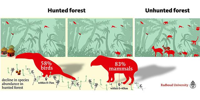Die Auswirkungen der Jagd in den Tropen auf einer Grafik