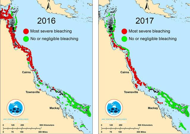 Grafik, die Korallenbleiche von 2016 und 2017 vergleicht