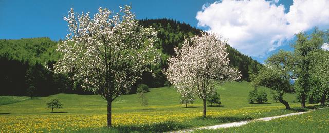 Frühling in Oberösterreich