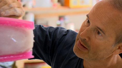 Erwin Wurm - Der Künstler, der die Welt verschluckt    Originaltitel: Erwin Wurm - Der Künstler, der die Welt verschluckt (AUT 2012)