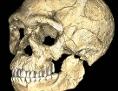 Fossilfund: Schädel von Homo sapiens