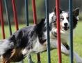 Hundetraining in der Hundeschule