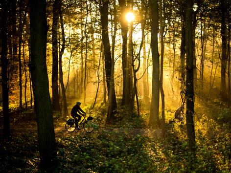 Sonnendurchfluteter Wald mit Radfahrer, Deutschland