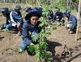 Landwirtschaft Philippinen