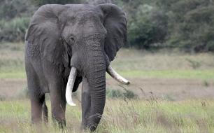 Im Reich der Königselefanten - Das Tembe Wildreservat in Südafrika