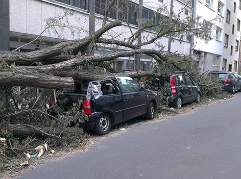 Bäume auf Autos gefallen
