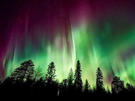 grüne und violette Nordlichter über einem Wald