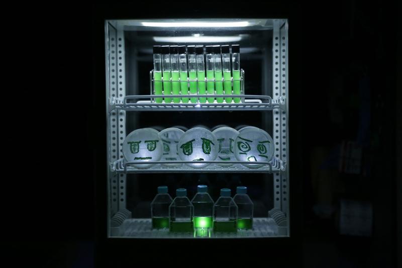 Petrischalen und Reagenzgläser