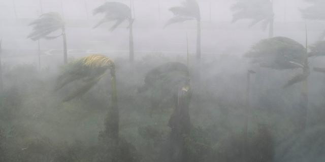 Palmen im Hurrikan