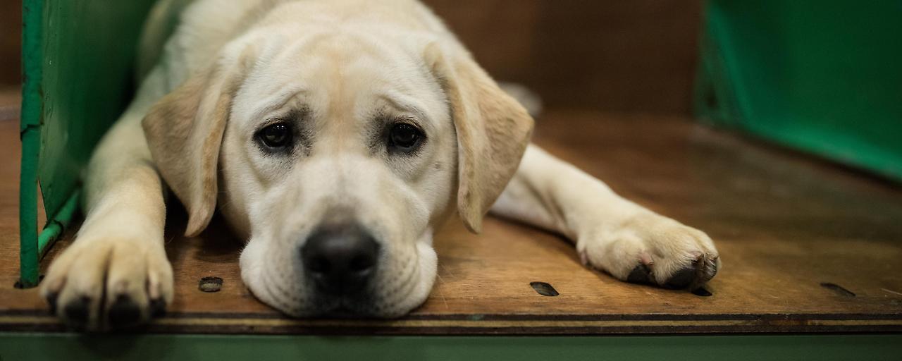 Faustregel zu Hundealter falsch