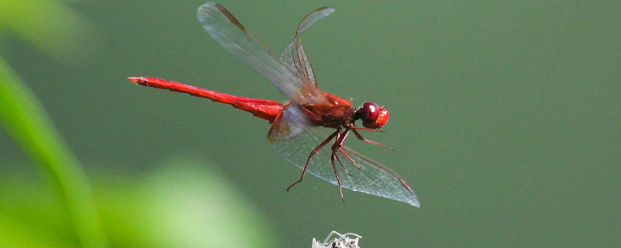 Insektenbestand drastisch geschrumpft