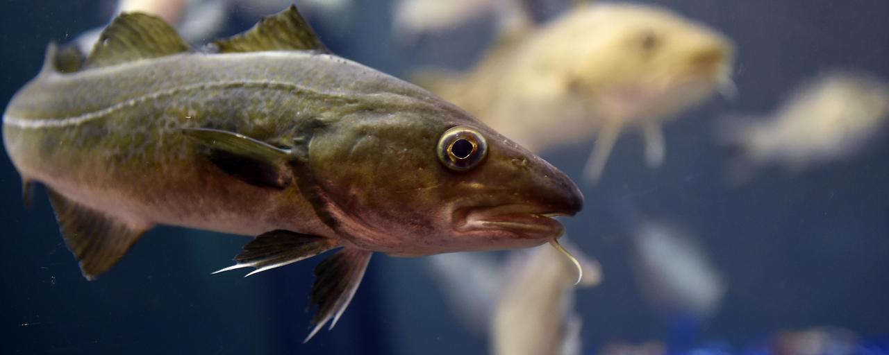 Erwärmung bedroht Fischbestand