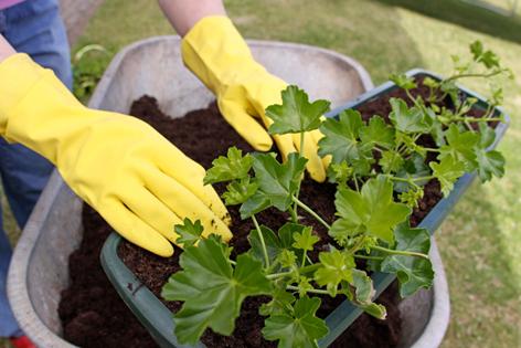 Eine Frau beim Pflanzen von Balkonblumen