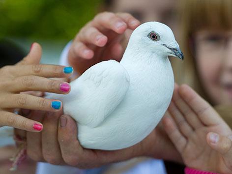 Kinderhände mit bunten Fingernägeln streicheln eine weiße Taube