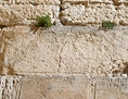 Mann betet an Klagemauer