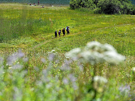 Wanderer auf einer grünen Wiese