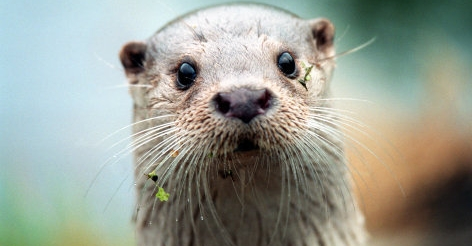 Die Spur des Otters