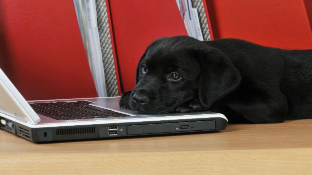 Hund liegt auf Laptop
