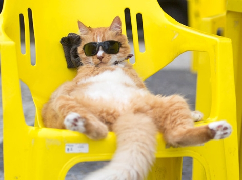 Katze mit Sonnebrille
