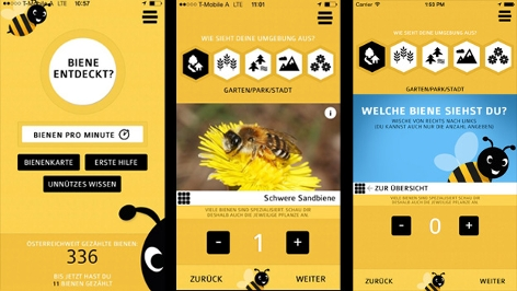"Screenshots ""Bienen Check"""