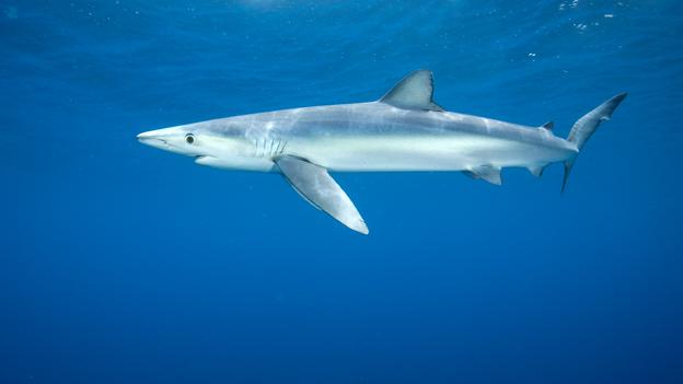 mythos hai sind die tiere wirklich monster oe3 orf at