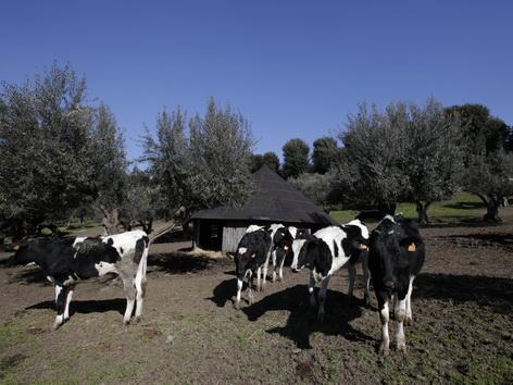 Vatikanischer Bio Bauernhof