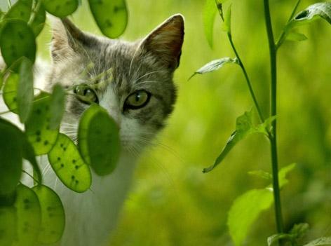 Katze versteckt sich hinter einer Pflanze