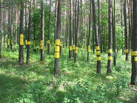 Gedenktäfelchen an Bäumen in dem Wäldchen bei Maly Trostinec, in dem gegen Ende des Zweiten Weltkriegs Tausende erschossen wurden