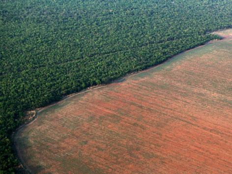 Der abgeholzte Regenwald in Brasilien