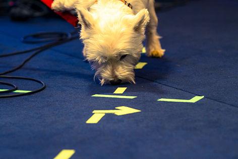 Leo Aberers Hund beim Ö3-Weihnachtswunder