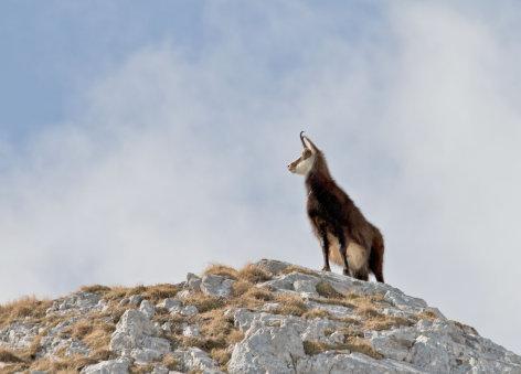 Schladminger Bergwelten - Von Gipfeln und Gämsen
